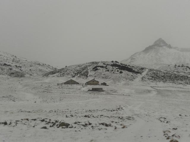 Lauferei Alp Astras - Tamangur