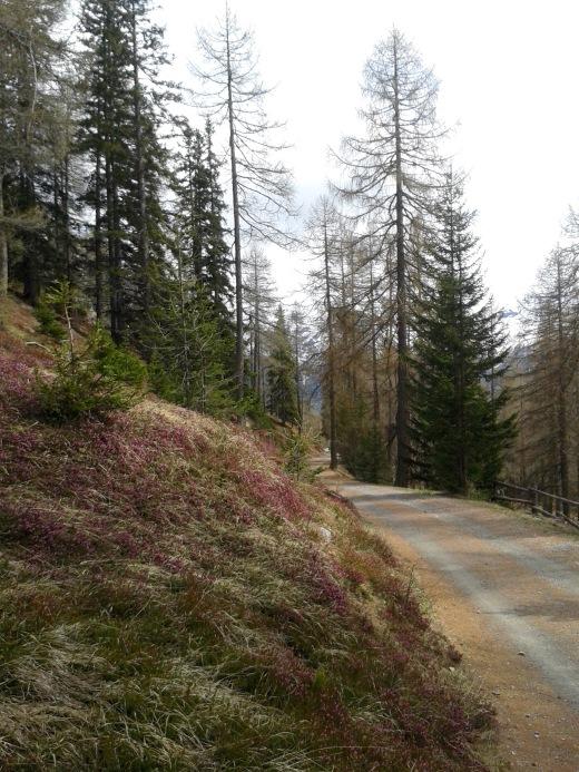 Lauferei - Wanderweg zwischen Lü und Alp Champatsch