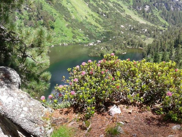 Lauferei - Unterer Murgsee und Alpenrosen