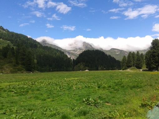 Lauferei - Alp